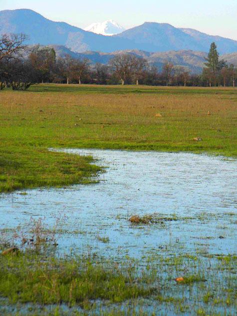 Rickert Ranch Vernal Pool